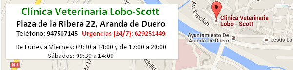 Clinica Veterinaria Lobo-Scott